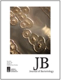 Cover: Colonies of Pseudomonas aeruginosa from CF airways. D Nguyen