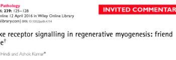 Toll-like Receptor Signalling in Regenerative Myogenesis: Friend and Foe