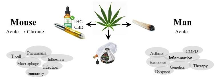 Carolyn Baglole Cannabis Research Program