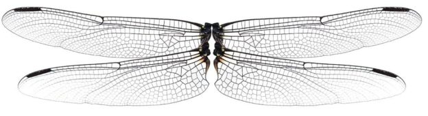Dragonfly wings are naturally antibacterial - article with Dao Nguyen
